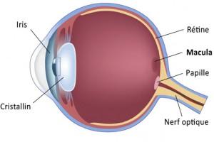 oeil macula DMLA